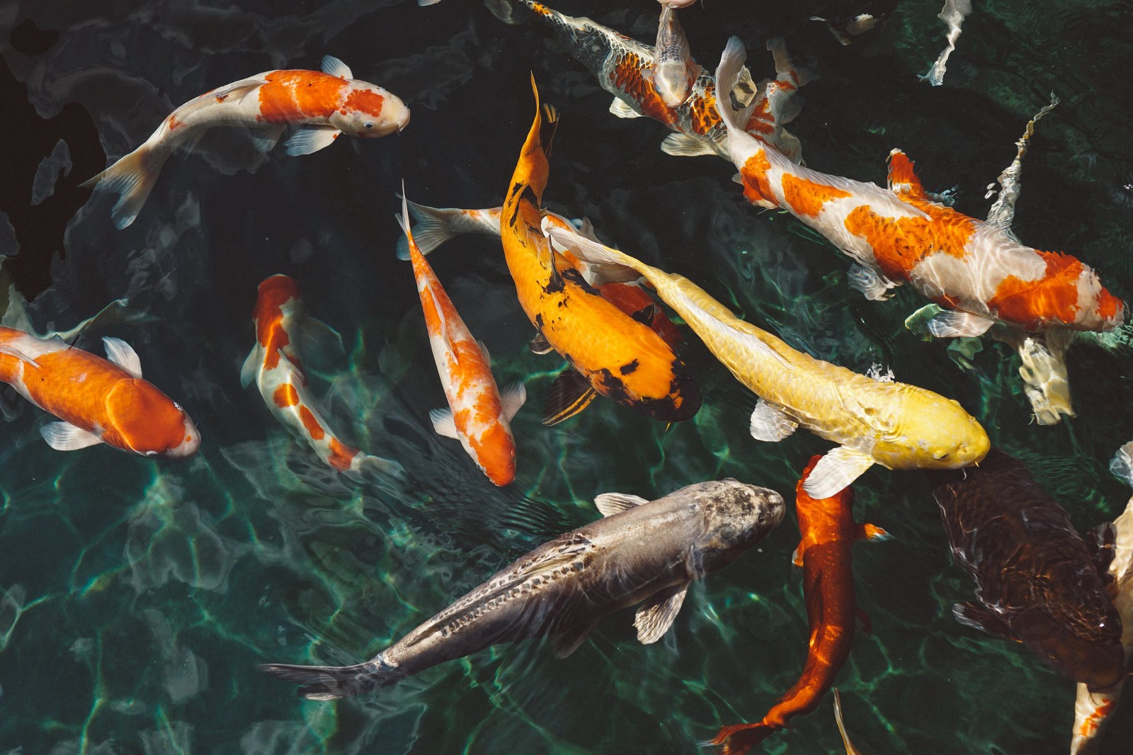 Fish in the pond dating
