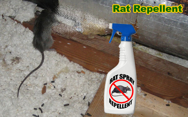 Home remedies for mice and rats